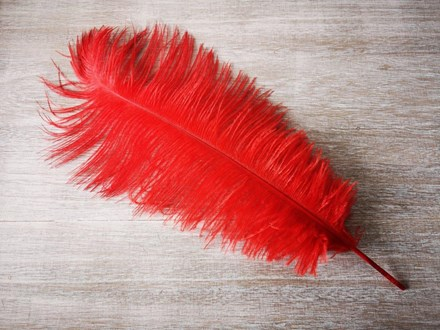 Ostrich Feathers Red 40-45cm Red feathers