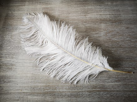HIRE - Ostrich Feathers 40-45cm - 1 Piece HIRE---Ostrich-Feathers-40-45cm---1-piece
