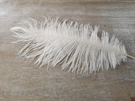 Ostrich Feathers 30-35cm Singles OFW35