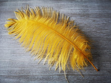 Ostrich Feathers Gold 40-45cm Ostrich-Feathers-Gold-40-45cm