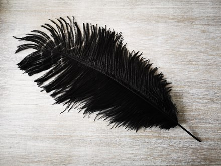 Ostrich Feathers Black 40-45cm Ostrich-Feathers-Black-40-45cm