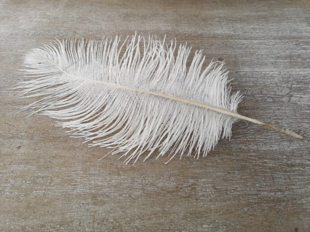 Ostrich Feathers 25-30cm Singles OFW30